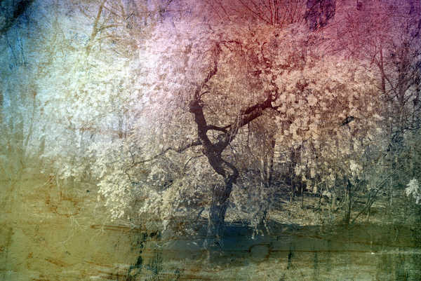 Collage Fantasy Baum 8:
