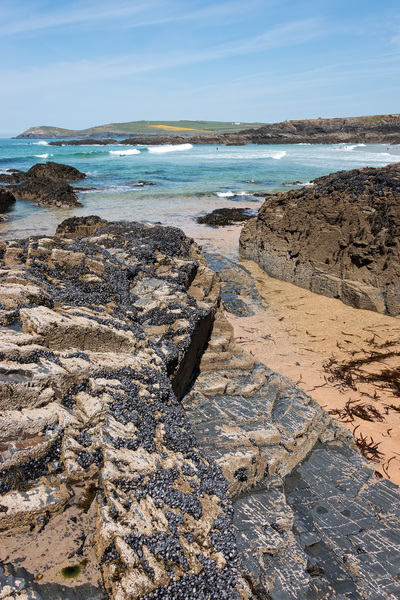 Coastline with mussels: Rocky coastline of northern Cornwall, England, with mussels (Mytilus) exposed at low tide.