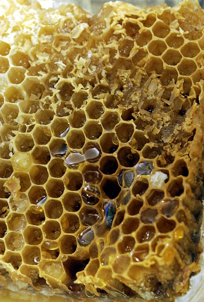 Fotos Gratuitas Rgbstock Fotos Gratuitas Honeycomb 1