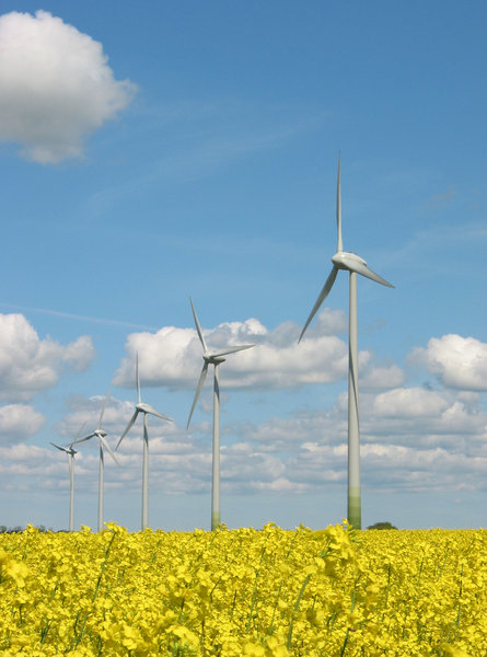 windmills and yellow field