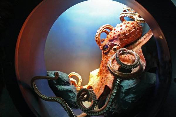 octopus: shot taken at the