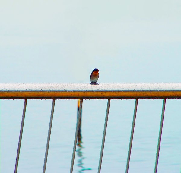 Alone: A rainy day at the beach, a wet railing, and one tiny bird all alone...