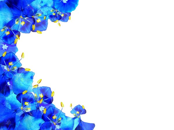Floral Border 40: A border of blue and yellow flowers on a white background with lots of copyspace. No redistribution of my images is allowed without permission. Not for sharing or sale on any other site.