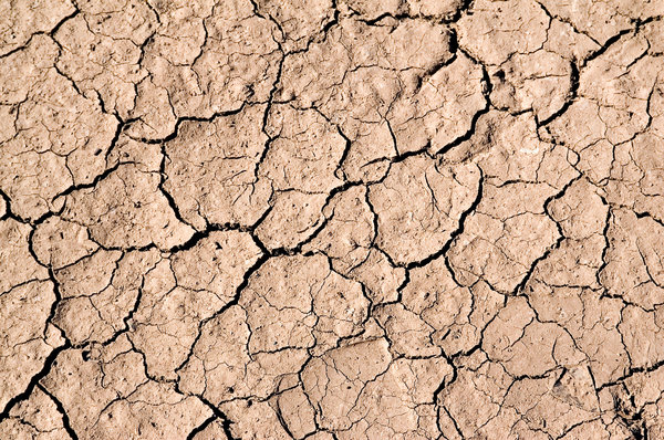 Really Dry Mud: Mud, dried and cracked in the desert sun.Photos on RGBStock are NOT copyright free.