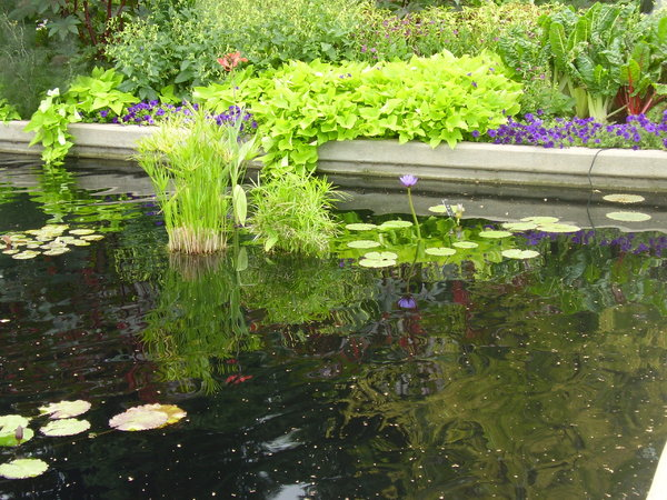 lily pads 3: A day at the Denver Botanic Gardens.