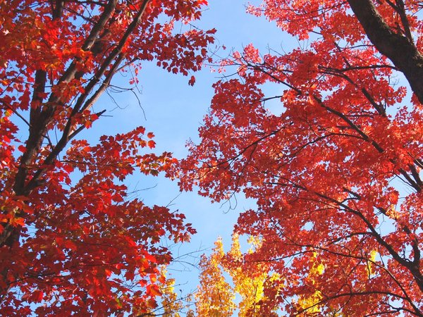 Fall Colors 1: The sun shining through the trees against a blue sky