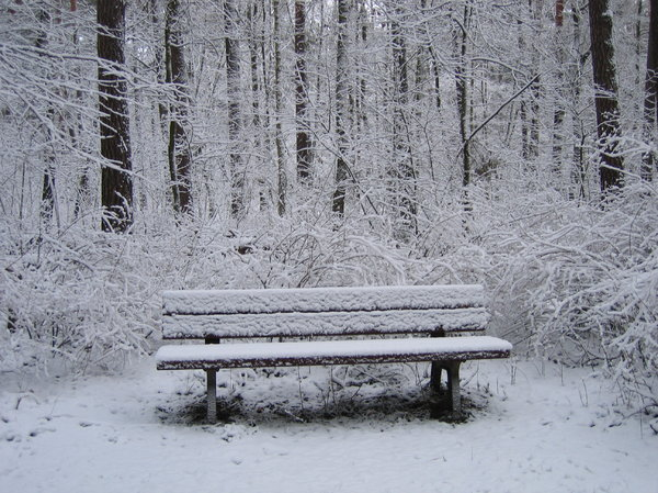bench in winter forest: you may not believe it, but this photo was taken in a forest in the middle of Berlin