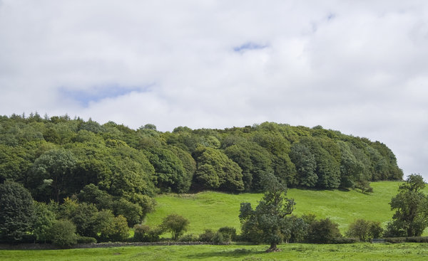 Summer Green: A little piece of Lancashire landscape overlooking the village of Sawley.