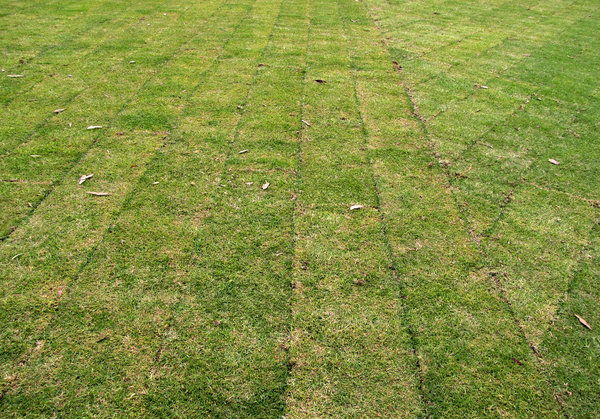 instant lawn: recently laid rolls of garden lawn