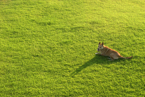 dog on green: All of my non human subject photos are unrestricted so you do not need to contact me for permission. If you are planning on using a photo with people, please contact me in advance. Please mind that I will not allow them to be used for any religious purpos
