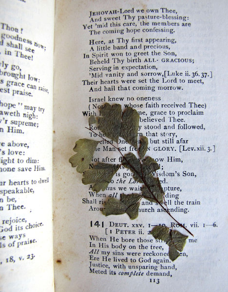 pressed plant: old pressed fern stem/leaves in old hymn book