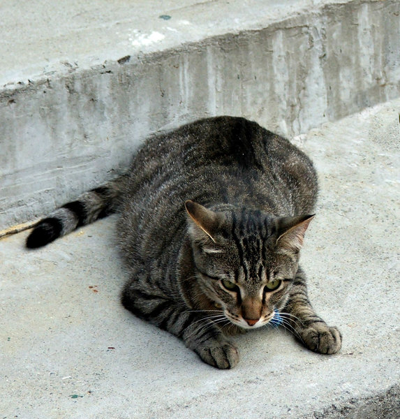 it's hard to get comfortable: cat lying on concrete step and seemingly unable to get comfortable