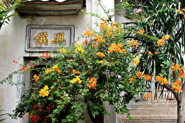 colourful courtyard corner: colourful bougainvillea in old Chinese courtyard corner