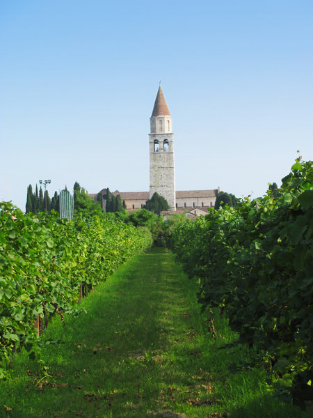 vineyard & church steeple