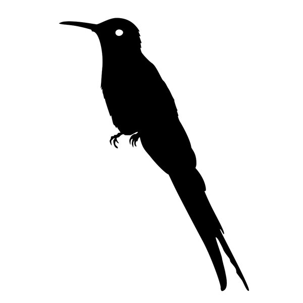 silhouette hummingbird: a series of four different bird silhouettes