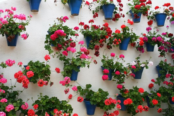 Wall pots: Pots of geraniums on a patio wall in Cordoba, Spain.