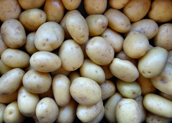 potatoes in bulk1: bulk quantitiy of white Nadine potatoes