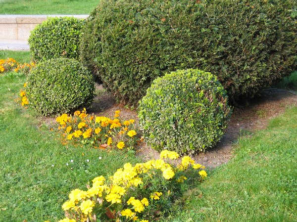 sculptured garden bushes