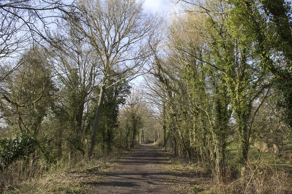 Cycle track, disused railway: A long distance cycle track on a former branch railway line in West Sussex, England.