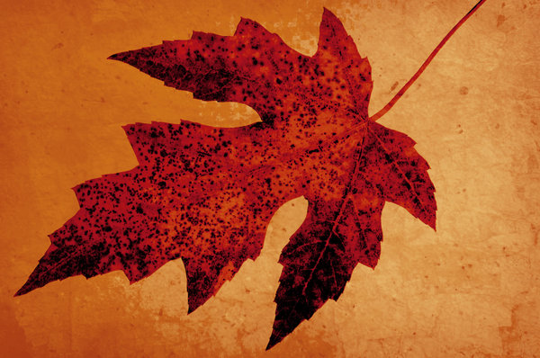 Red & Yellow: Grungy leaf texture.