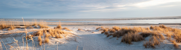 Sand Dunes at Magic Hour: » 	Sand Dunes at Magic HourLocation is Georgia coast. Time of day thirty minutes before sunset, Natural light with no processing to photo. Panorama shot from three photographs on Tybee Island. Time of year; January