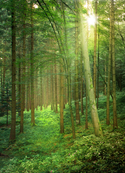 Sunlight in natural Forest: Sunlight in natural Forest