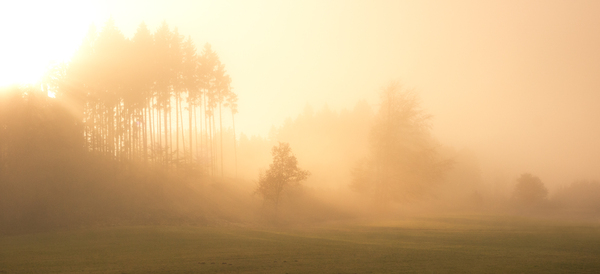 Foggy Autumn Forest: Misty Forest in Autumn