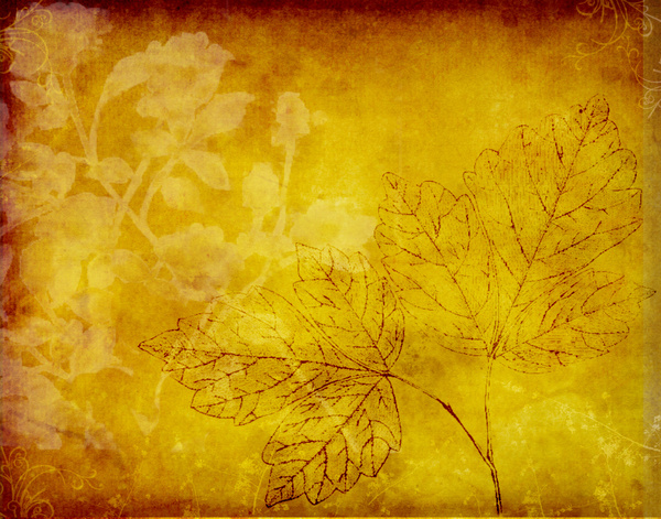 Botanical texture: Several floral layers were used for this background