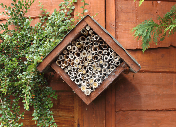 Bee house: Tubes for carpenter bees, some have been used this year in south wales, UK