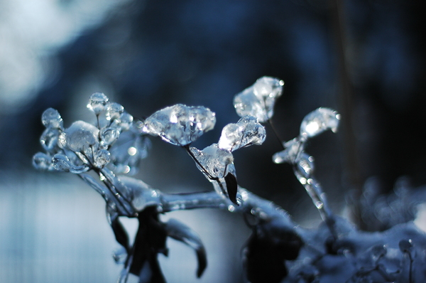 winter: Still life covered in ice.