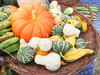 decorative gourd: decorative gourd