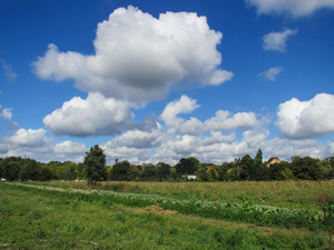 clouds over a field: clouds over a field