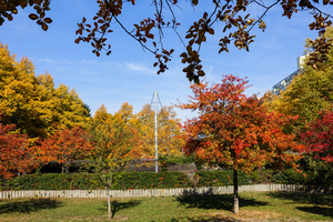 autumn trees: autumn trees
