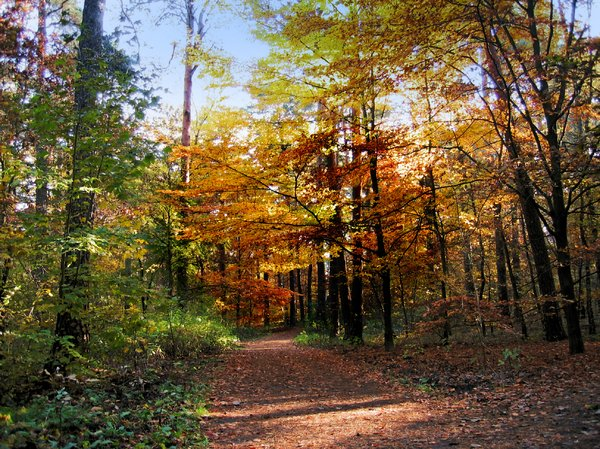 peaceful autumn forest: peaceful autumn forest