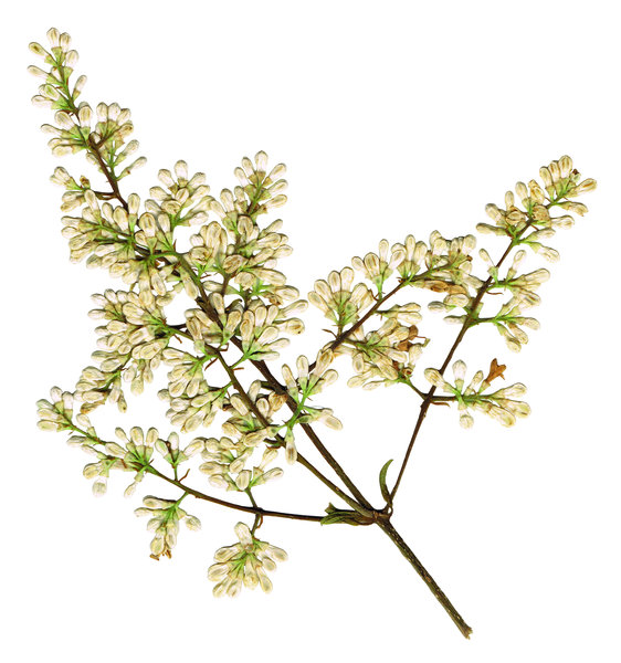 Twig: A small piece of a bush.
