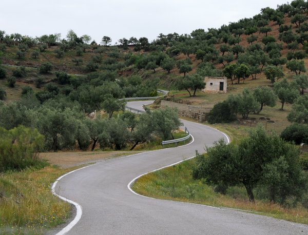 Curves on the road: Curves in the road between olive groves