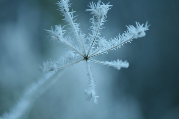 frozen: frost on the plants