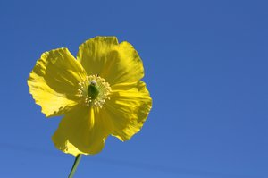 Yellow Flower on Blue Sky: Yellow Flower on Blue Sky