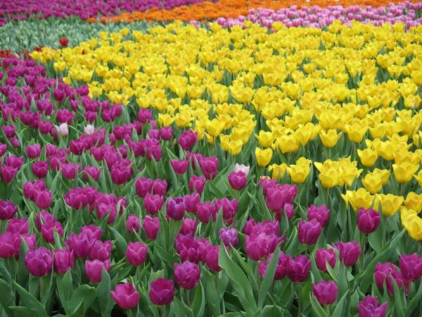 Stock De Fotos Gratis Campo De Flores Hermosas Coolhewitt23