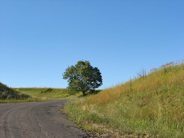 one tree: one tree by the road