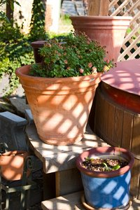 Clay Pots: Terra cotta pots, with last year's faded annuals, ready to be prepared for this years Spring flowers.