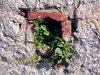 Hole in the Wall 1: Plants growing from a hole in a wall.