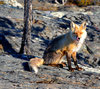 Fox 5: These pictures were taken 10km north of Yellowknife, NWT Canada