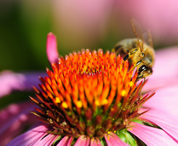 Honey Bee & FLower 3: Honey Bee & FLower