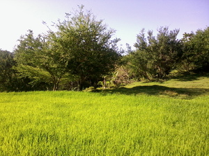 parayan (rice field): no description