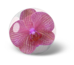 Spring Water: Flowers trapped in a droplet, or is it glass, or a paperweight, or maybe just Photoshop.