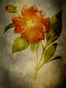 Botanical illustration: Retro background was used