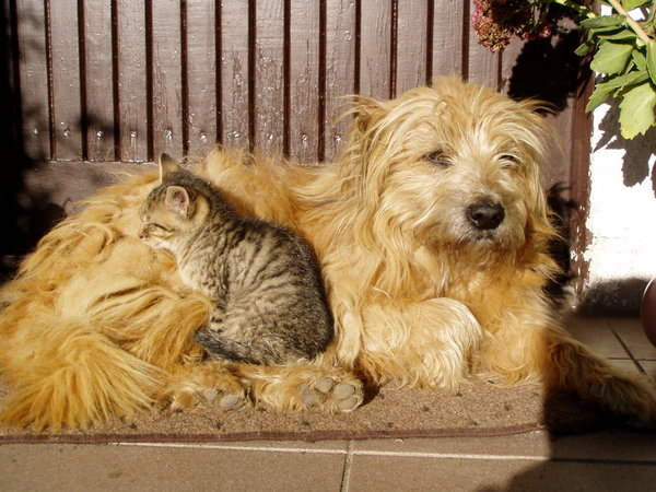 dog and cat: two friends