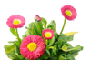 spring: fresh, colorful  spring flowers