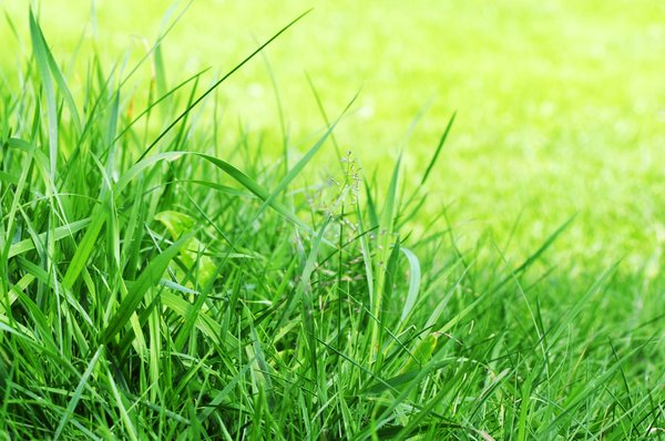 Grass: Grass on a sunny summers day